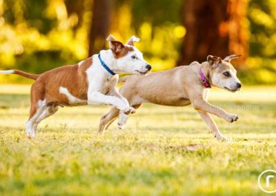Pet Rescue through Photography Campaign
