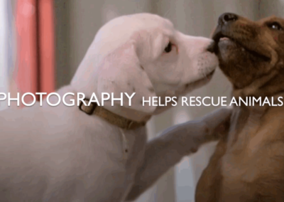 Animal Rescue Through Photography Campaign 2020